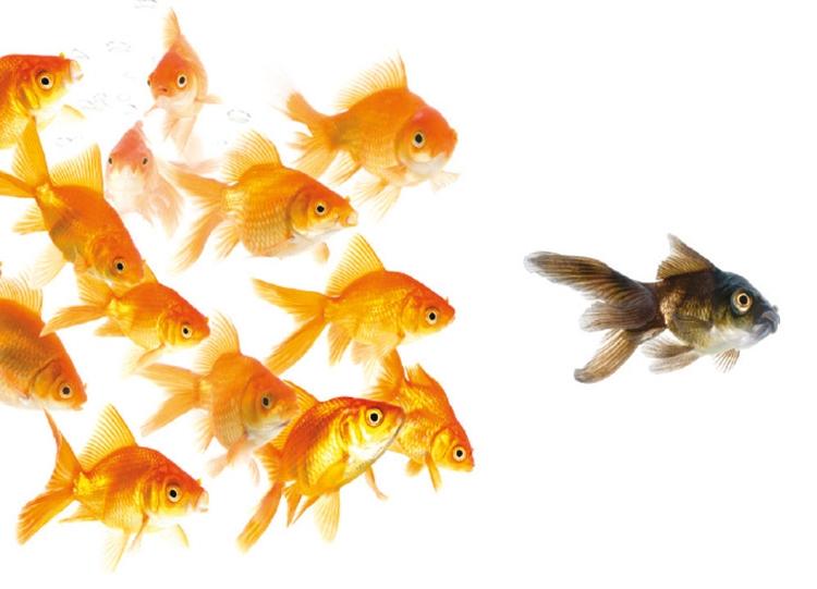 Gold-Fish-Following